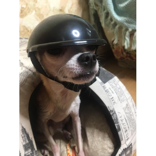 Шлем для животных