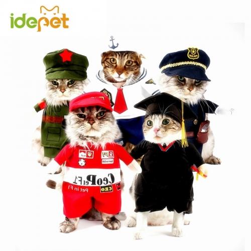 Кошачий костюм (униформа)